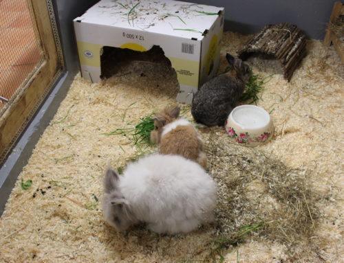 Kaninchen-Schnupfengruppe