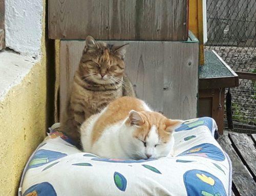 Katze Marla und Kater Michi